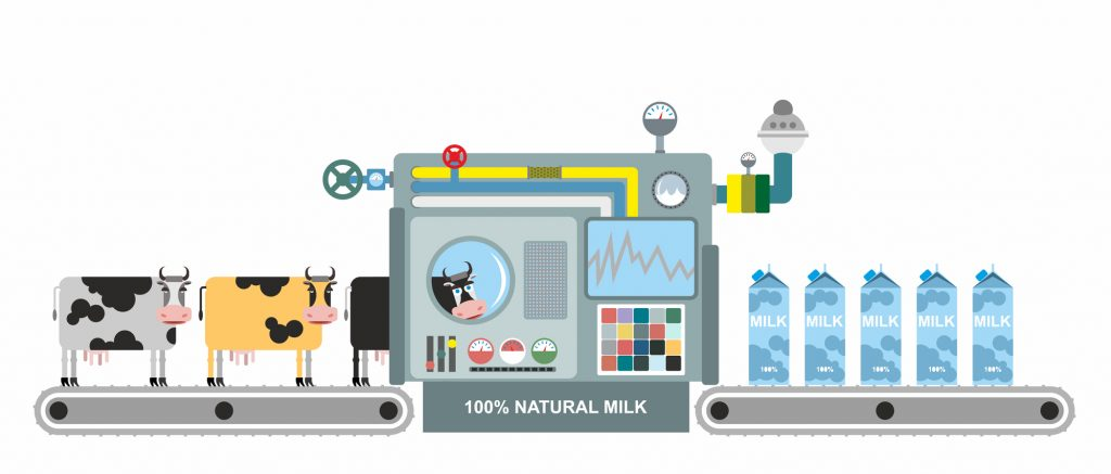 Infographics  milk production. Stages of milk production from co